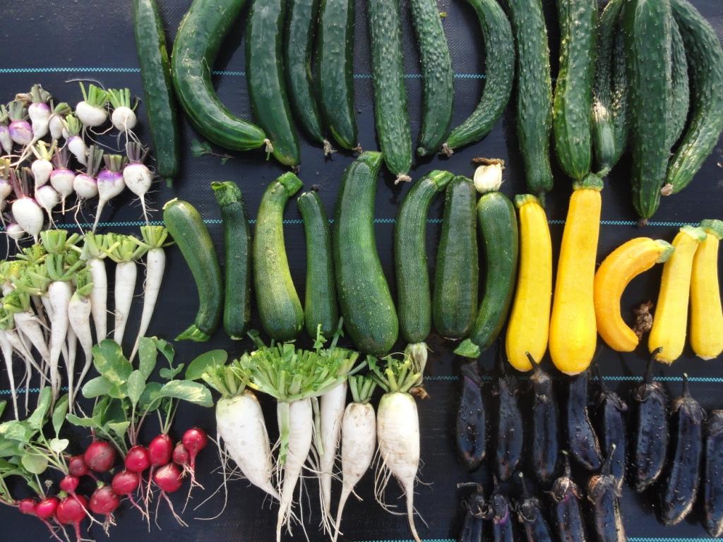 収穫の夏!てんとう虫にも感謝。家庭菜園を愛するご近所さんも紹介