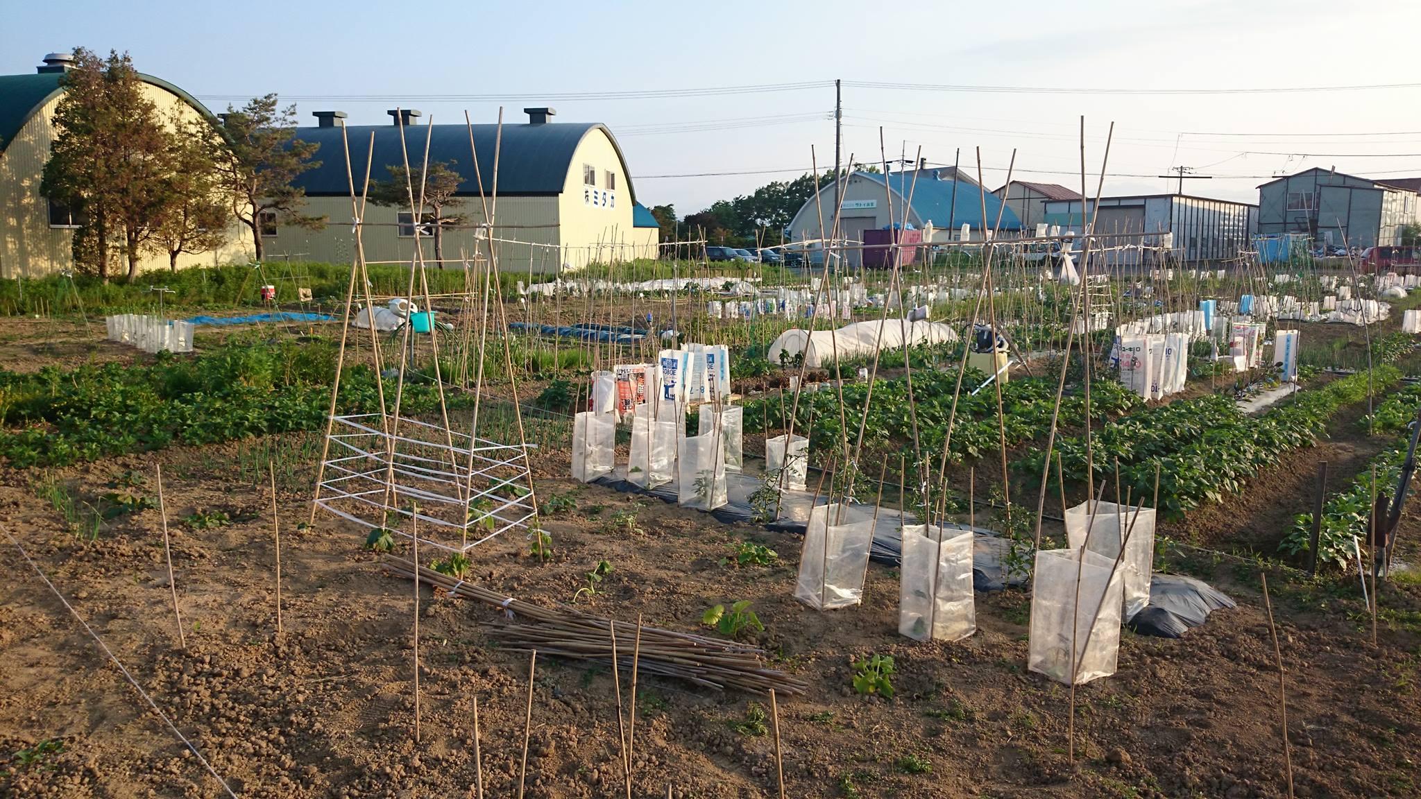 札幌の市民農園を巡回中!