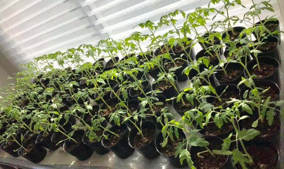 2017年春以降の予定は未定です。るるる畑参加者募集と、田植え開催は計画中です