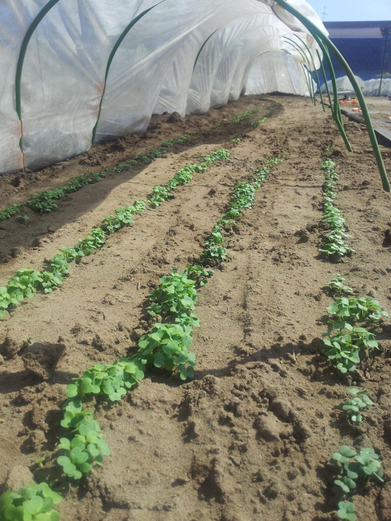 雨降らなくて大変...。枝豆、スイカを植えました。