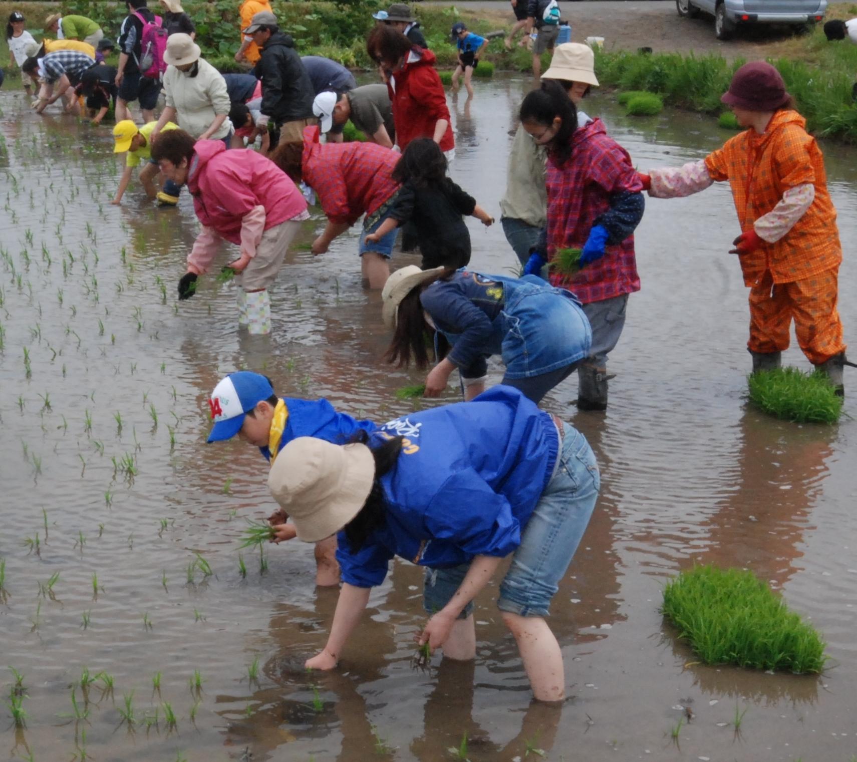 札幌、石狩で料理教室、農業体験を楽しむなら...