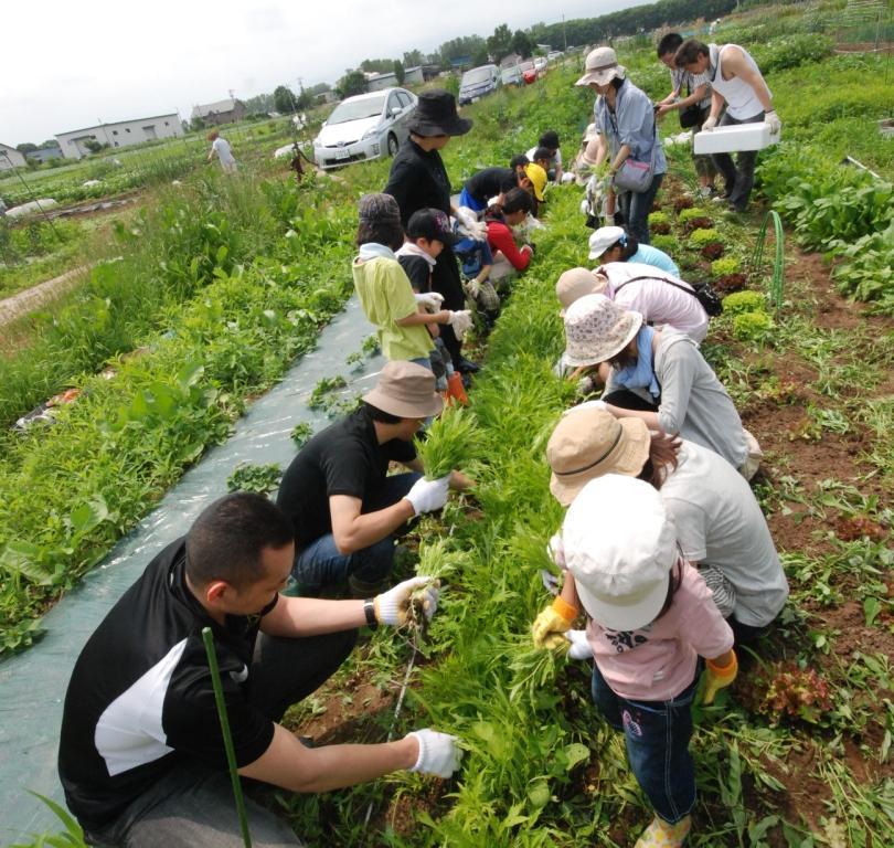 るるる♪畑での農作業総集編 2012