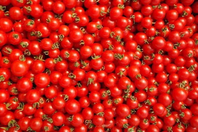 農業体験記 北海道石狩市高岡のノーザンノーザンさんでミニトマト収穫