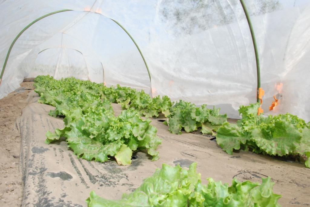 風にも負けず頑張った苗たち。そして種植え