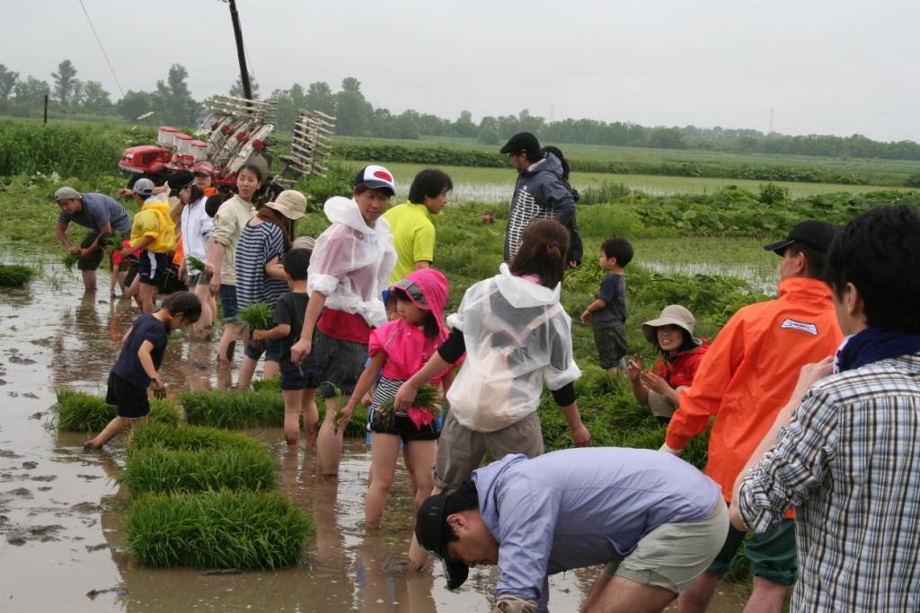 皆で田植え体験  札幌・石狩・千歳等から参加