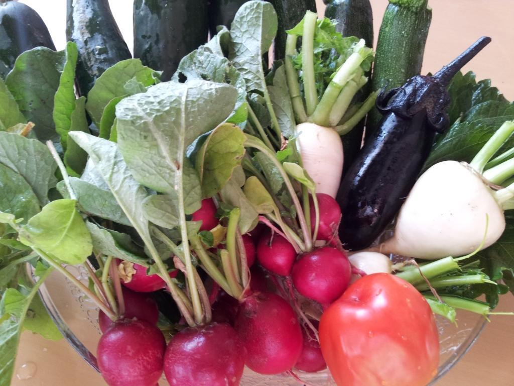 毎週!家庭菜園の楽しみ 札幌から車で20分