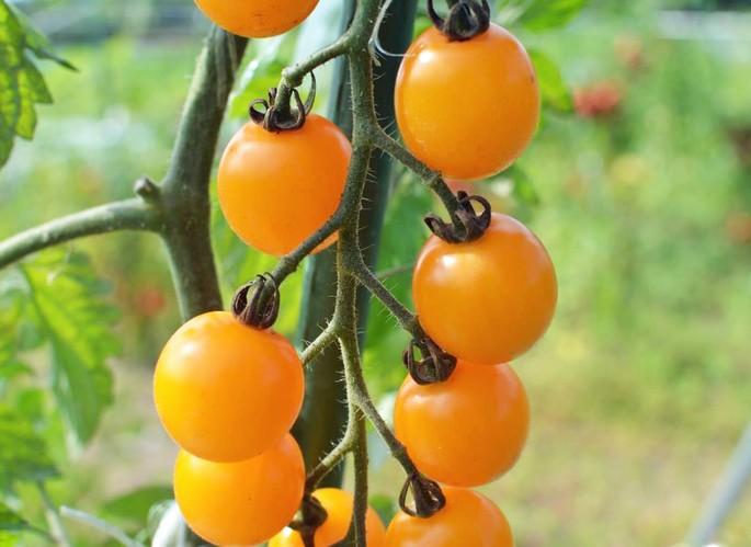 札幌の隣、石狩市で2018年家庭菜園メンバー追加募集中!