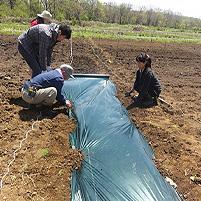 耕してマルチして苗植えてトンネル。家庭菜園も基礎をしらないとおいしい野菜を作れない!
