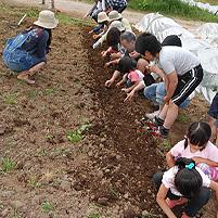 るるる♪の初開催は石狩の農家さんで田植え体験!2012年6月